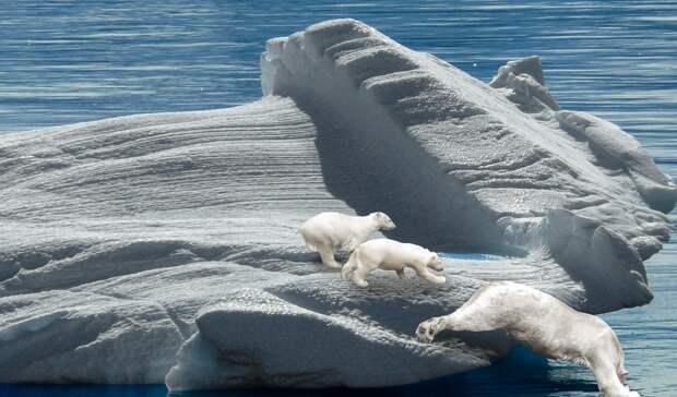 Фотовыставка порезультатам экспедиции «Хозяин Арктики-2021» пройдёт 22сентября