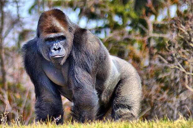 В Китае биологи создали гибрид человека и обезьяны