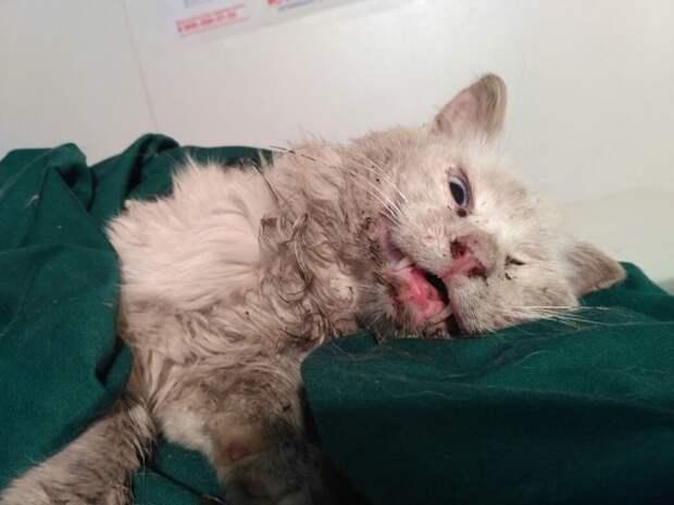 В Амурской области волонтеры спасают кота, который 4 года жил возле пустого дома хозяев