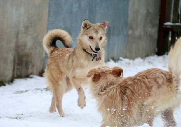 Собака хватала лапами железные прутья забора, умоляя забрать ее