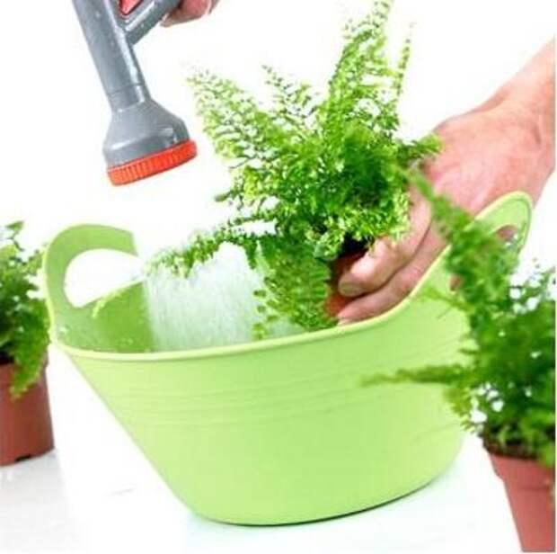 Комнатные цветы Гигиена комнатных растений: от губки до легк…