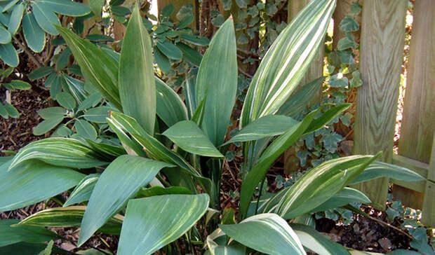 Растения, которые могут расти в глубокой тени