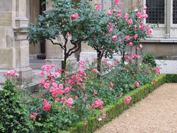 Розы и розовые сады. Обсуждение на LiveInternet - Российский Сервис Онлайн-Дневников