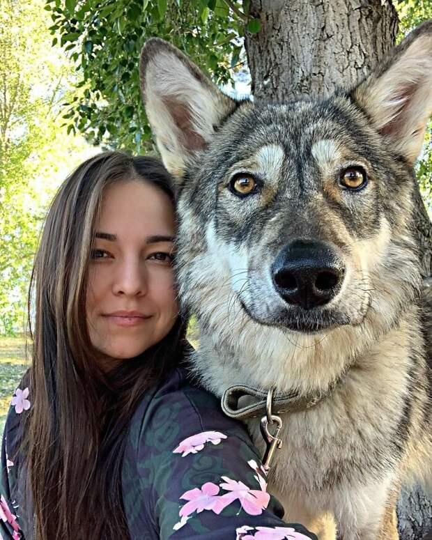 Хозяйка домашней волчицы Киры рассказала правду о ней