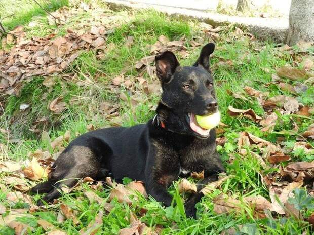 Этот пес медленно умирал на улице. Но через несколько недель его стало не узнать!