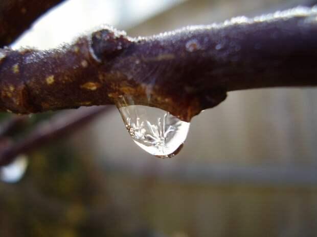 Освободить яблони от ледяного панциря можно только дождавшись оттепели