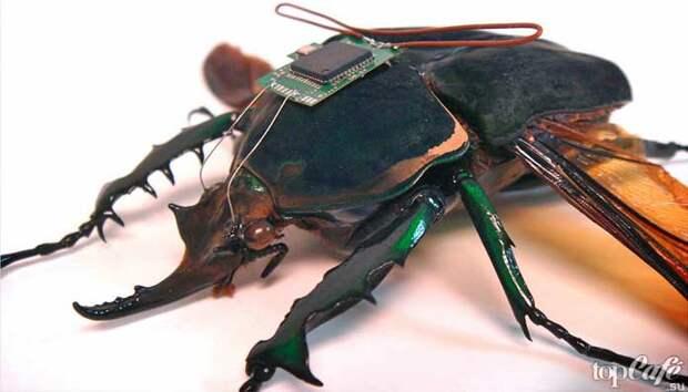 Почему важны насекомые: Насекомые в науке