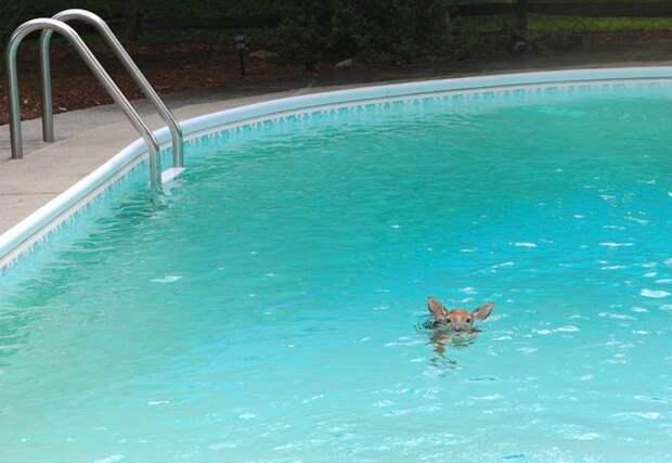 20. И, конечно же, какая вечеринка у бассейна без дорогого гостя… бассейн, животные