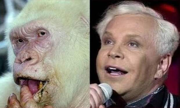 Редкая белая горилла и такой же уникальный российский певец животные, копии, юмор