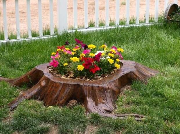 Пень как декоративный элемент сада (30 фото)