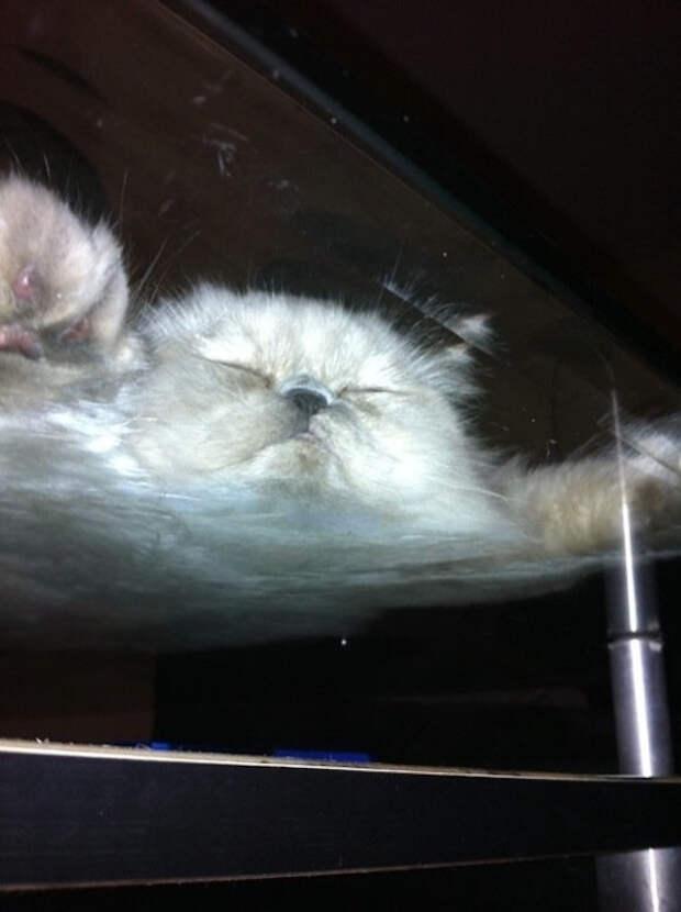 вид снизу коты на стеклянных столах (5)
