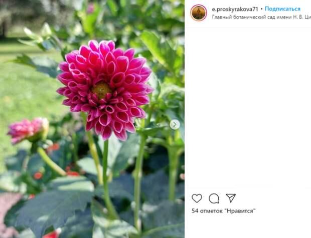 Фото дня: в Ботаническом саду распустились георгины