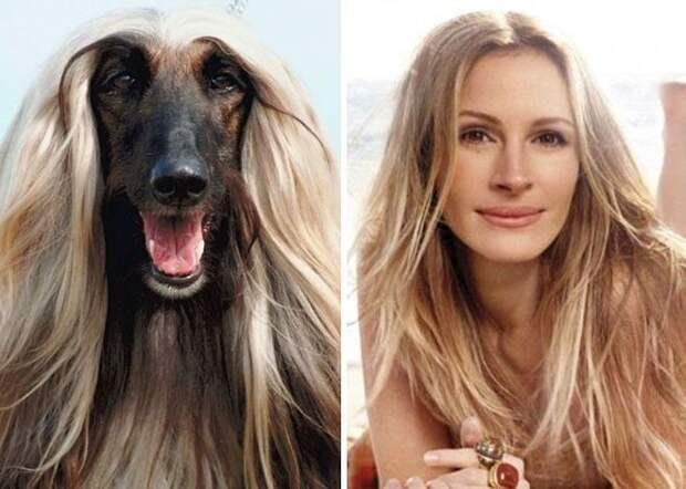 Не только волосы шикарны но и характер такой же борзый как у этой борзой животные, копии, юмор