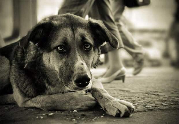 Не бросайте старых собак...