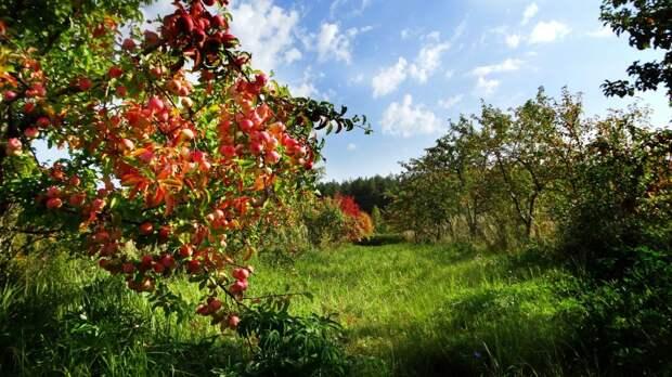 Голосование за ботанический сад Удмуртии, «новый» возраст Луны и напиток от Букингемского дворца: что произошло минувшей ночью