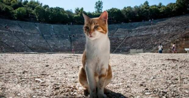 Как Ватикан с кошками боролся (7 фото)