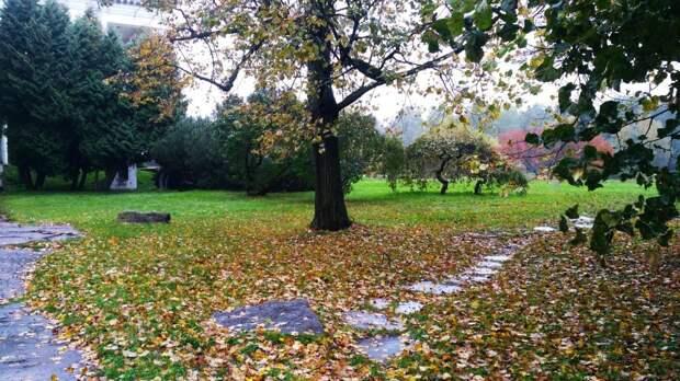 В Ботаническом саду высадят ивы