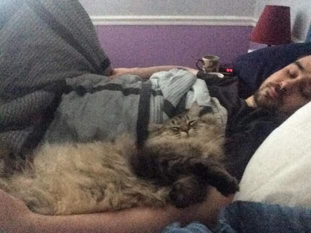 Кот начал вести себя очень странно. Когда хозяйка узнала причину его необычного поведения, она была шокирована