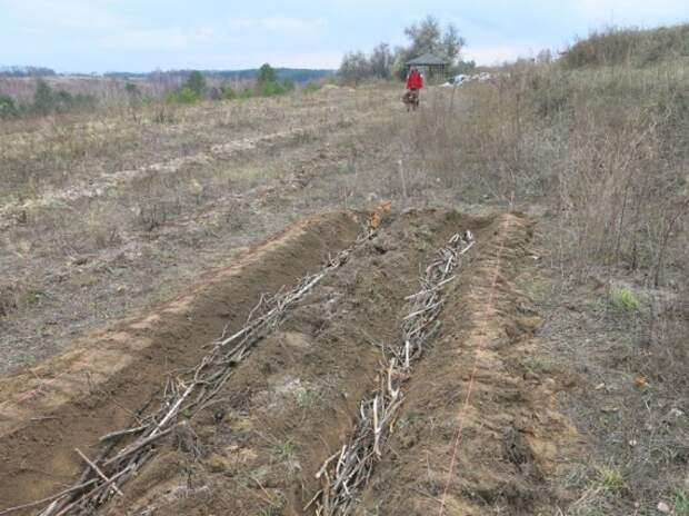 закладываем ветки: Органическое земледелие, пермакультура