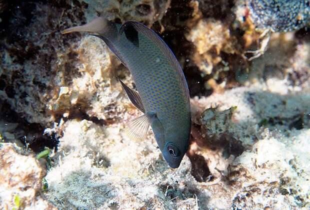 В Австралии обнаружена хищная рыба, маскирующаяся под свою жертву