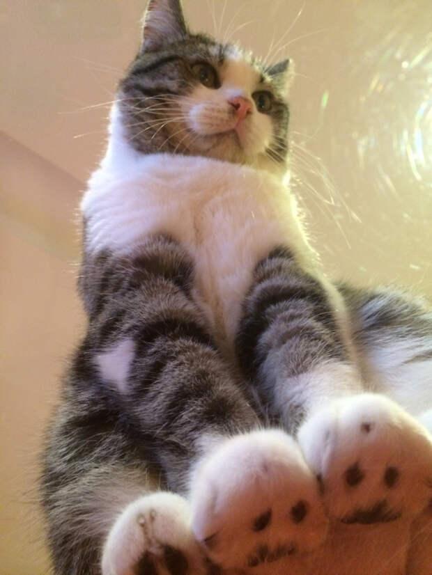 вид снизу коты на стеклянных столах (2)