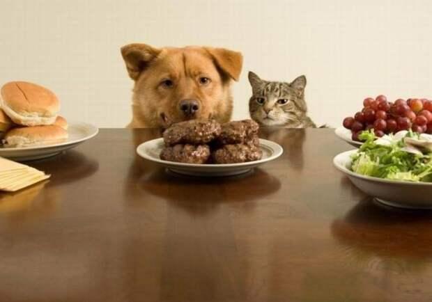 Вот она настоящая сила воли вкусно, еда, животные