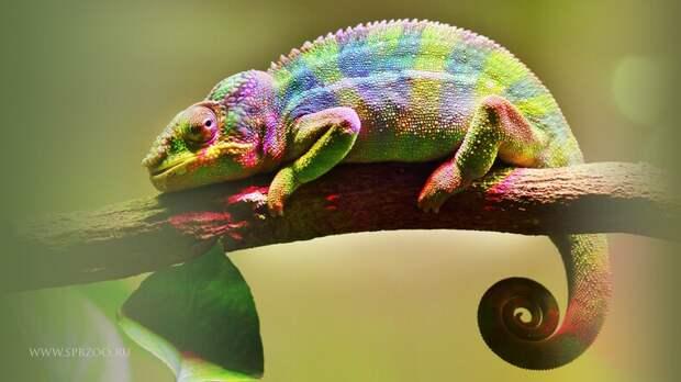 10 самых ярких в мире животных