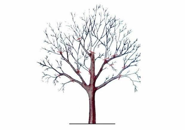 Омоложение старой яблони Лайфхак, дача, огород, полезные советы, сад