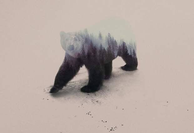 Животные в лесу и лес в животных Андреаса Ли (подборка)