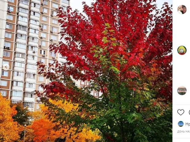 Фото дня: осень во всех ее проявлениях