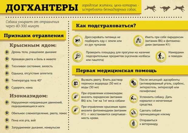 В Петербурге расправились с догхантерами, пойманными с поличным