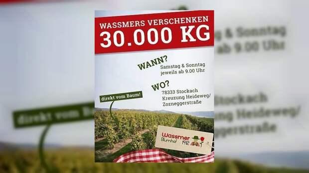 Ферма в Германии бесплатно подарила людям 30 тонн яблок. Их некому продавать!