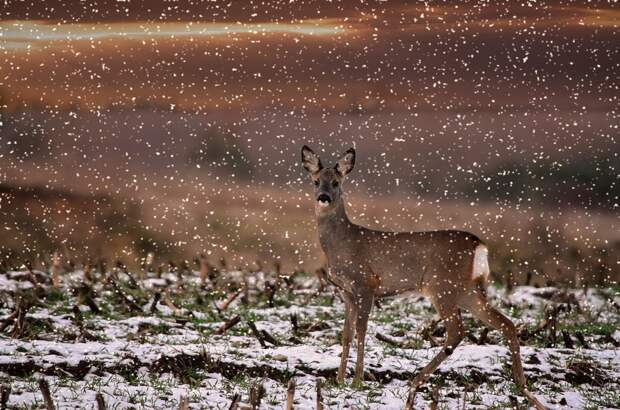 Рождественская охота: постпреда Свердловской области в Москве поймали на территории охотхозяйства