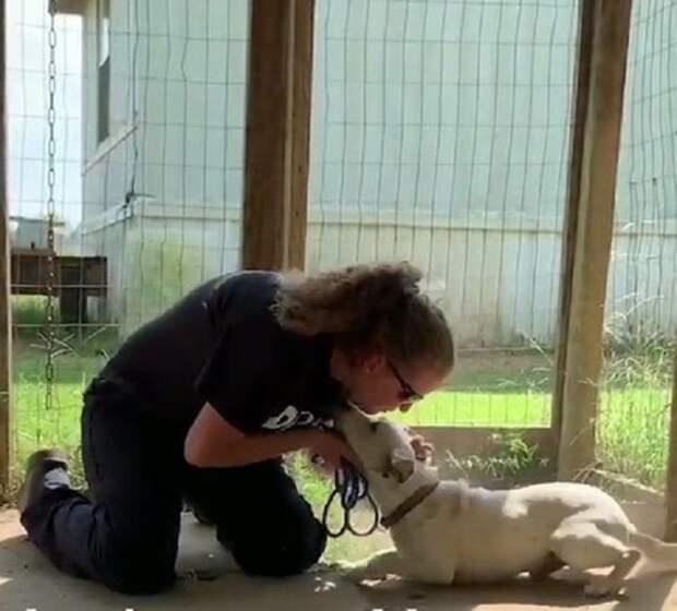 Женщина гладит собаку