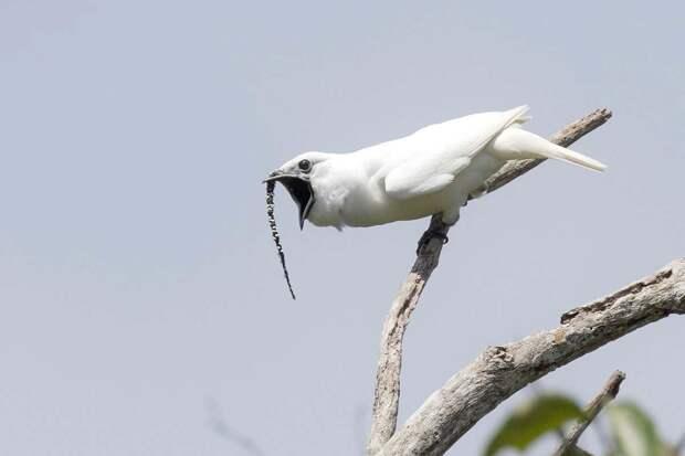 птица поет
