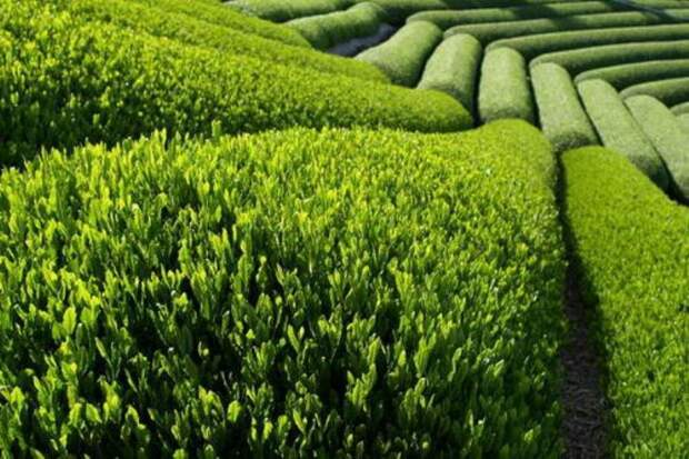 13 самых полезных в мире растений