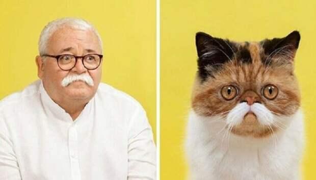 17 портретов кошек и людей, невероятно похожих друг надруга