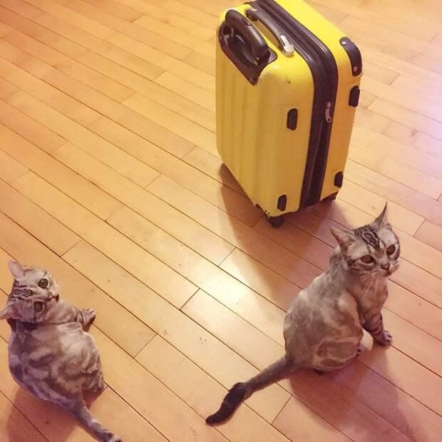 Кошка-пессимист стала новой знаменитостью в Сети