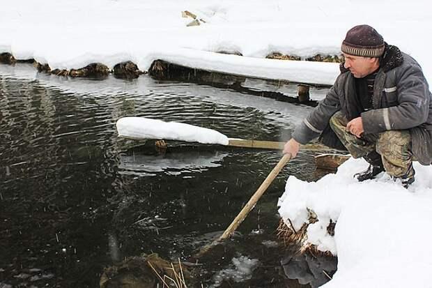 В Красноярском крае фермер разводит элитную рыбу в… ручье возле дома! Фото: Владимир ТАСКИН