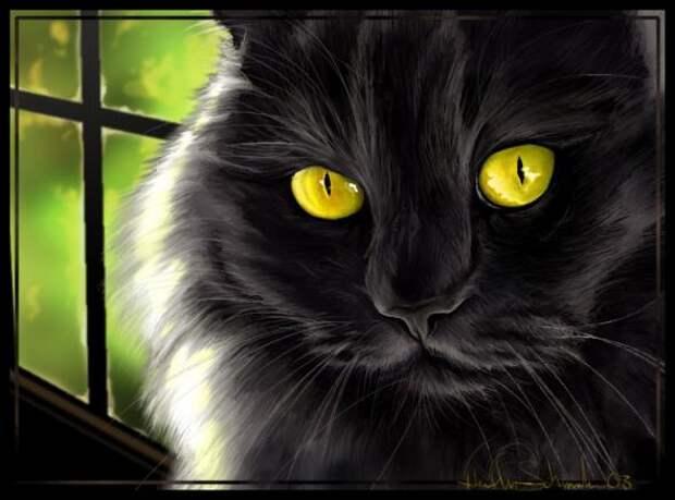 портрет кота (590x437, 34Kb)