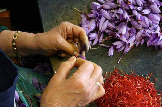 Шафран - самая дорогая пряность в мире
