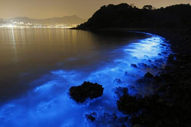 Биолюминесценция ночесветок