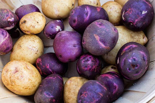 А нам фиолетово! Какая польза от сиреневых продуктов