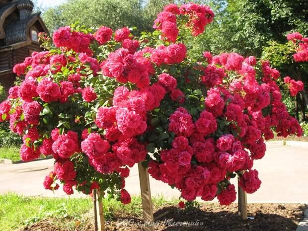 """Многолетние цветущие цветы """" Русский сад"""