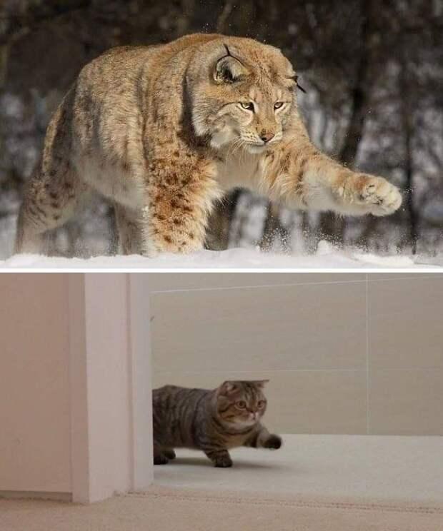 Забавные и харизматичные кошки в естественной среде обитания
