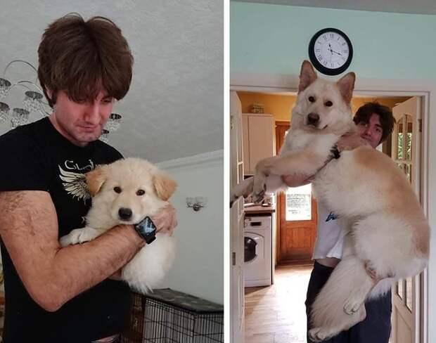 17 фото с повзрослевшими щенками доказывают, что время летит слишком быстро