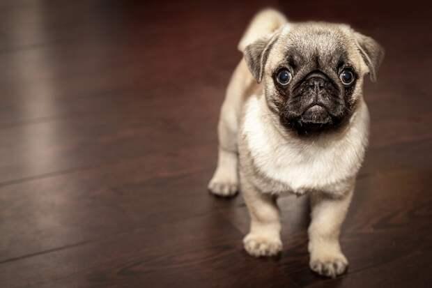 Собака/Фото: pixabay.com