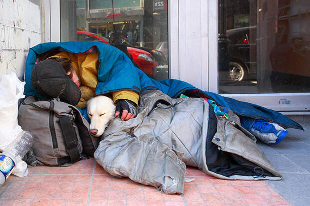 15. Вместе с лучшим другом  бездомный, любовь, собака