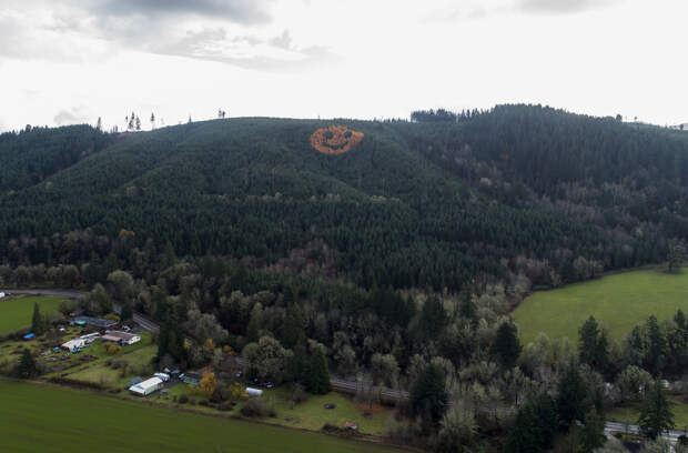 Who planted a giant smiley face of trees? - oregonlive.com