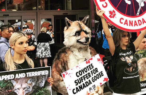 Акция протеста канадского общества защиты животных Peta на Международном кинофестивале в Торонто